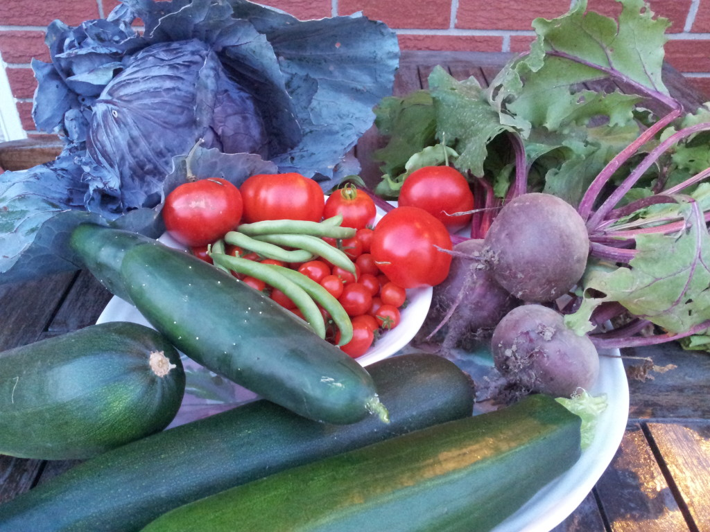 food from our garden